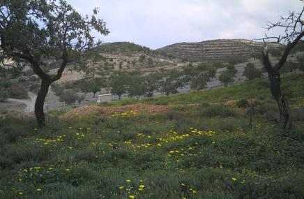Plot in Lorca for sale